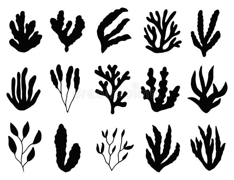 Silhouette d'algue d'isolement usines marines sur le fond blanc illustration libre de droits