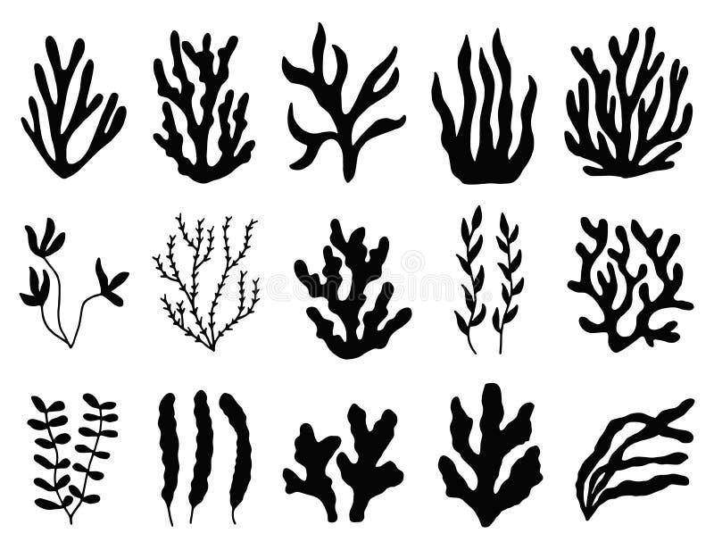 Silhouette d'algue d'isolement usines marines sur le fond blanc illustration stock