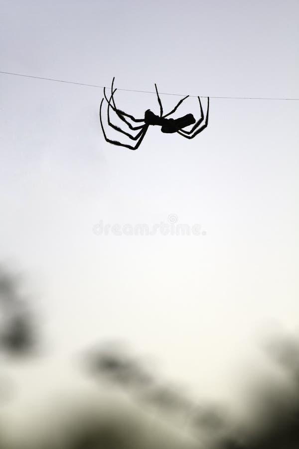 Silhouette d'araignée de tisserand de corps rond photos stock