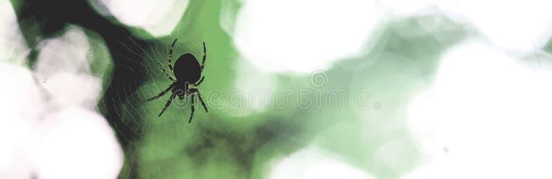 Silhouette d'araignée et de Web avec les points légers sur le fond vert-foncé de jambes image libre de droits