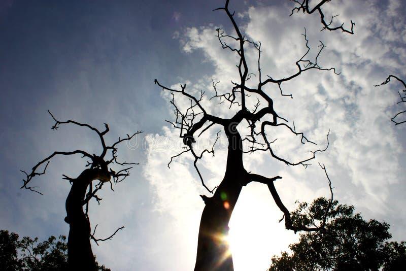 Silhouette d'arbre à Delhi, Inde photos stock