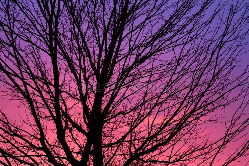 Silhouette d'arbre à l'aube photographie stock