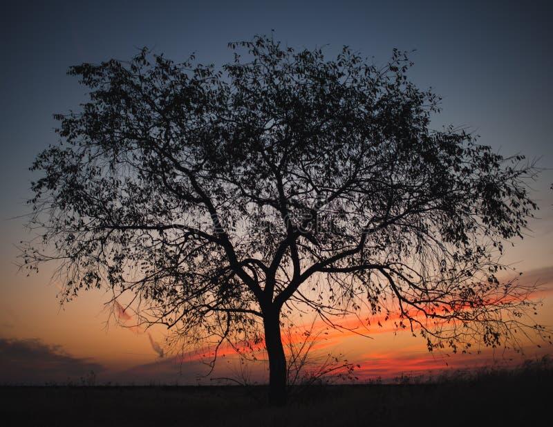 Silhouette d'arbre au lever de soleil photographie stock libre de droits