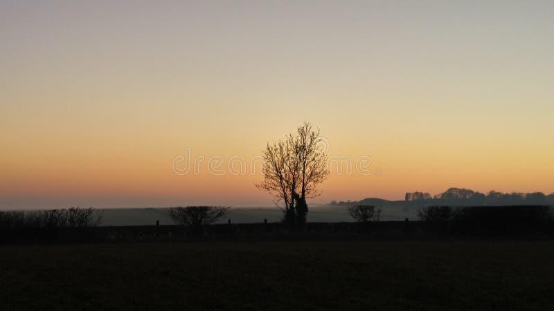 Silhouette d'arbre contre le coucher du soleil au-dessus du rissington photos stock