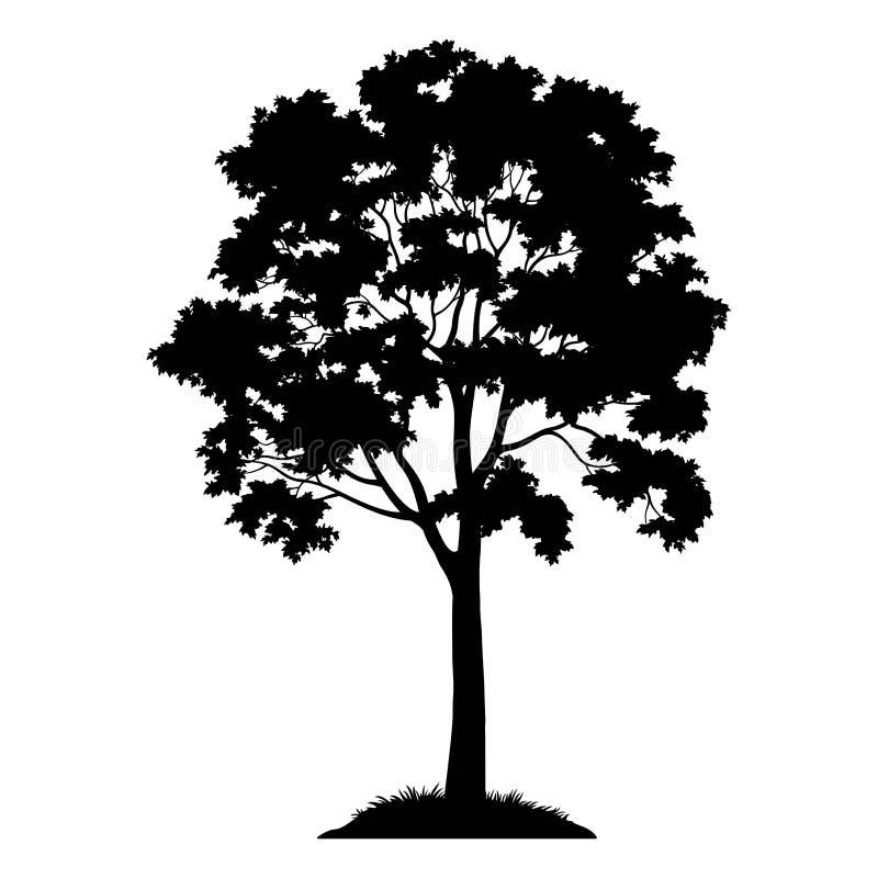Silhouette d'arbre d'érable illustration stock