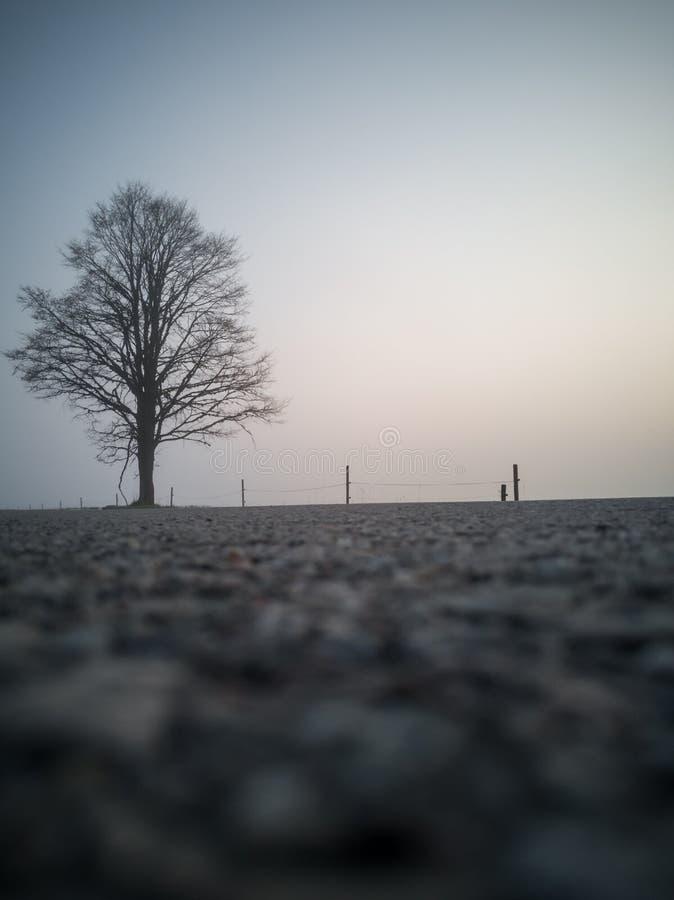 Silhouette d'arbre dans un début de la matinée sans compter que la route de campagne image libre de droits