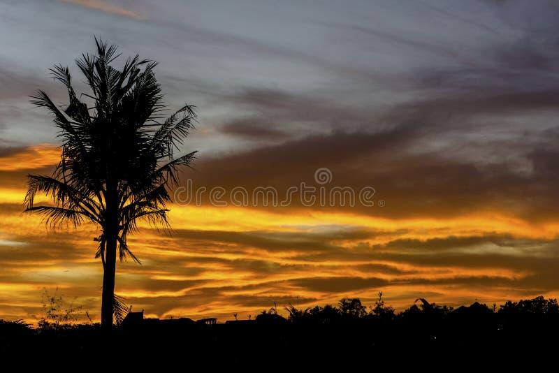 Silhouette d'arbre de noix de coco simple sur le coucher du soleil nuageux image stock