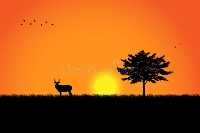 Silhouette d'arbre et de cerfs communs au-dessus de beau coucher du soleil image libre de droits