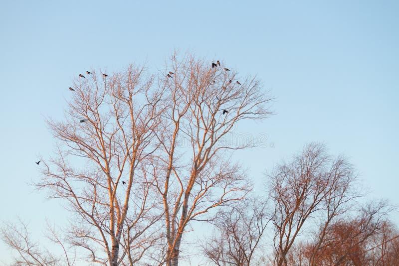 Silhouette d'arbre et d'oiseaux photos stock