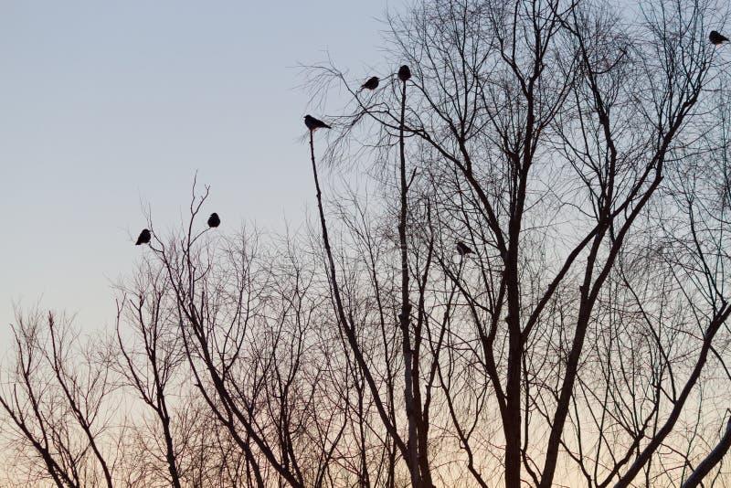 Silhouette d'arbre et d'oiseaux images stock