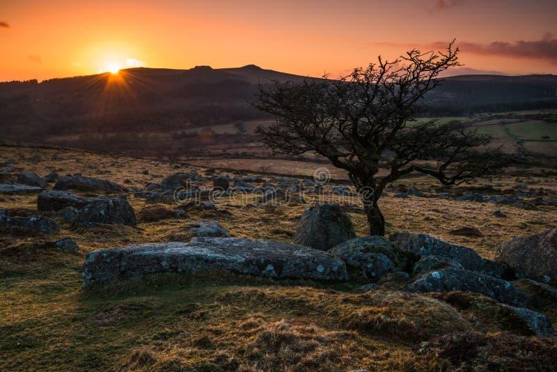silhouette d'arbre isolé au coucher du soleil en montagnes image libre de droits