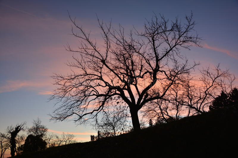 Silhouette d'arbre le soir photo stock
