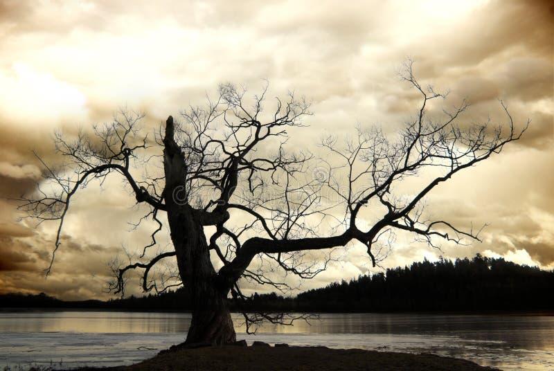 Silhouette d'arbre nu photographie stock