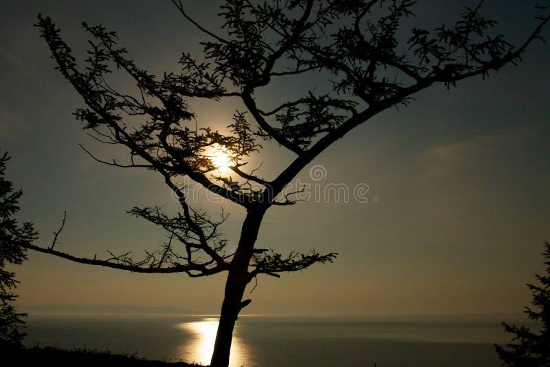 Silhouette d'arbre sur le fond de coucher du soleil photos libres de droits