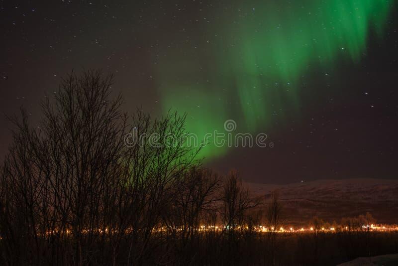 Silhouette d'arbres de lumières du nord photo stock