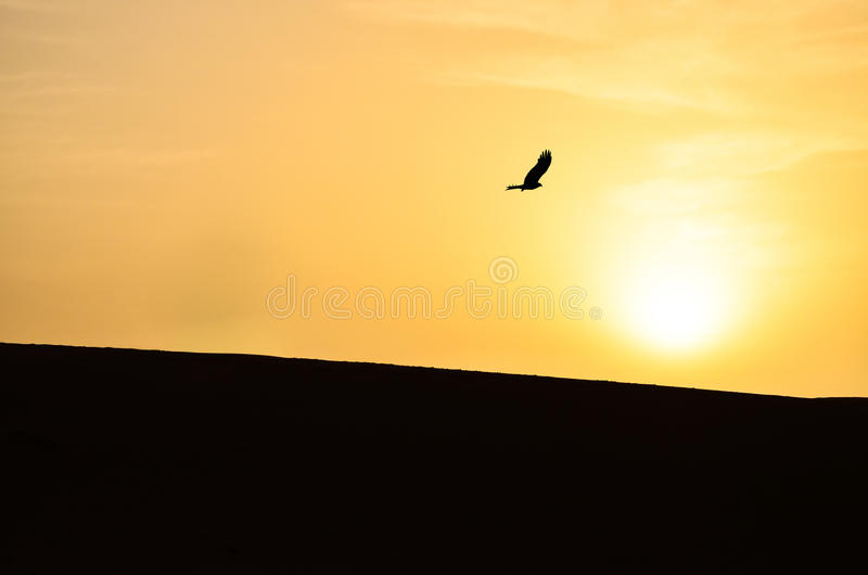 Silhouette d'Eagle Hovering Over Sahara Desert photographie stock