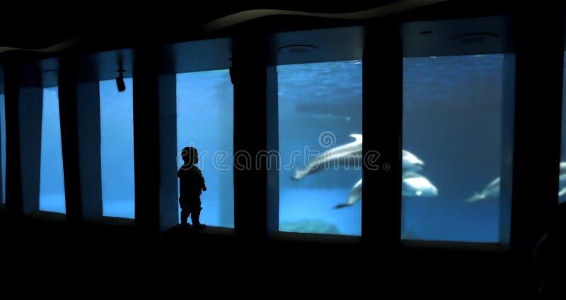 Silhouette d'enfant à l'aquarium photographie stock