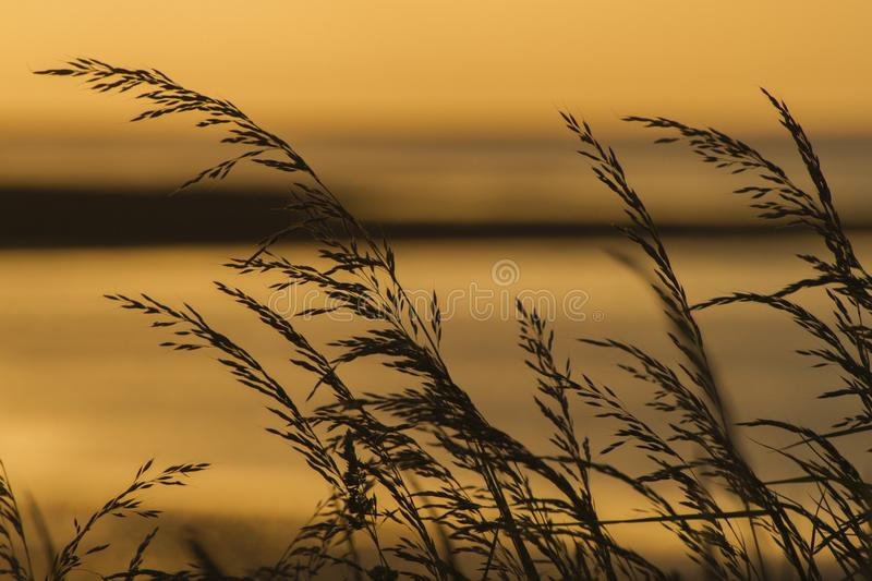 Silhouette d'herbe au coucher du soleil photo stock
