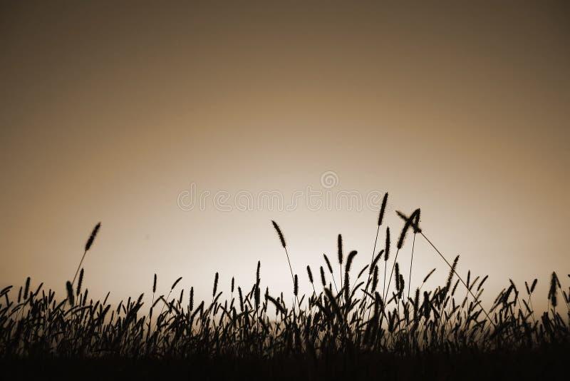 Silhouette d'herbe dans la sépia image libre de droits