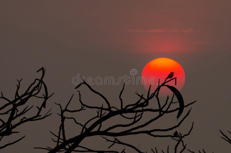 Silhouette d'oiseau photo stock