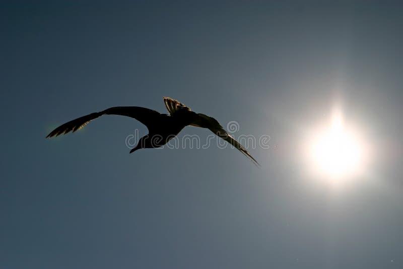 Silhouette d'oiseau photos stock