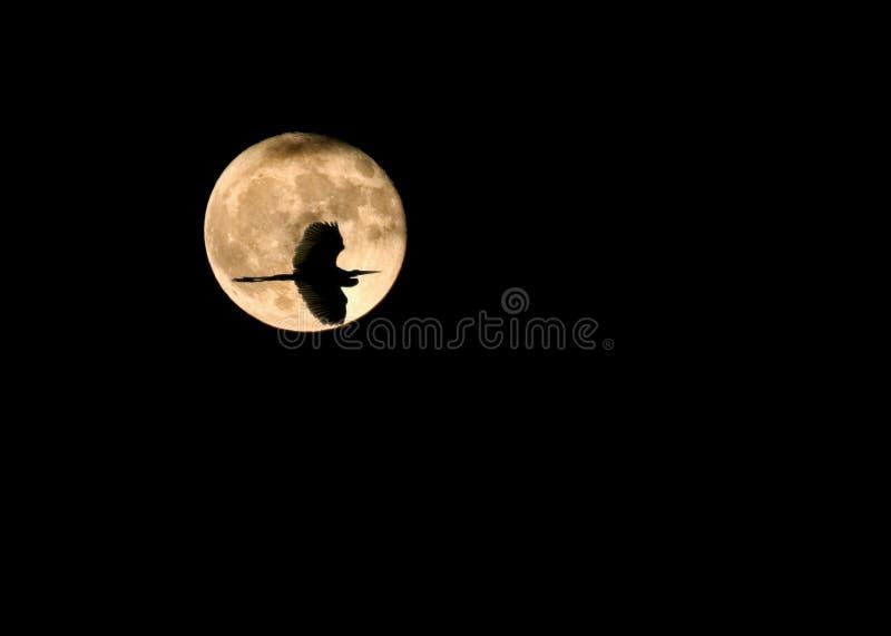 Silhouette d'oiseau au-dessus de lune photo stock