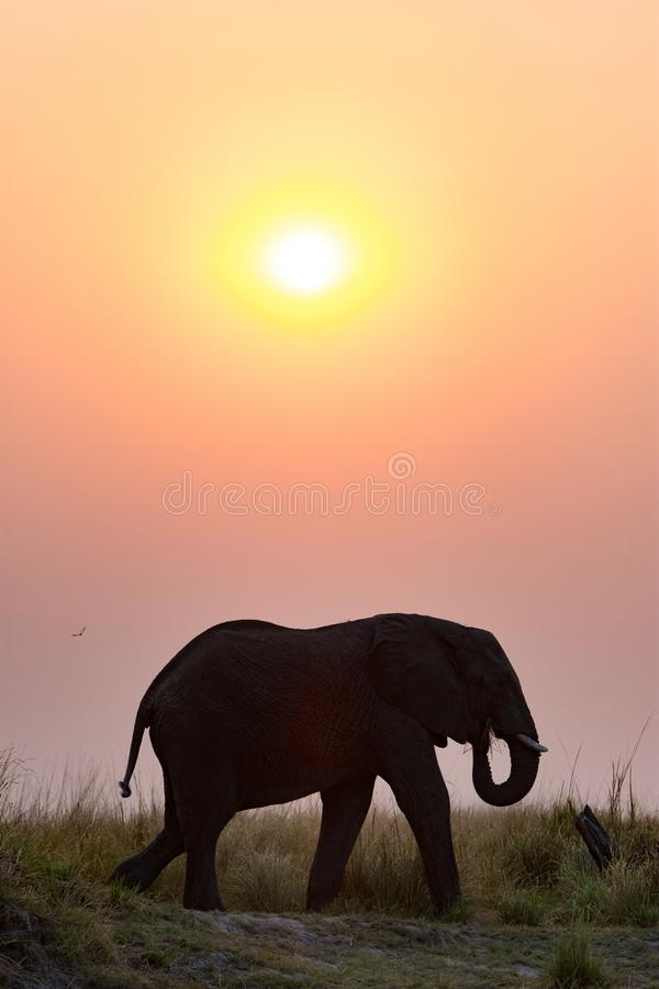 Silhouette d'un éléphant contre le coucher du soleil image libre de droits