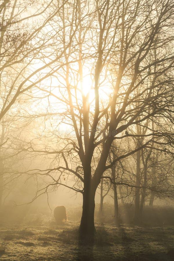 Silhouette d'un arbre photos libres de droits