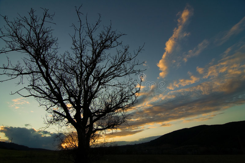 Silhouette d'un arbre photo stock
