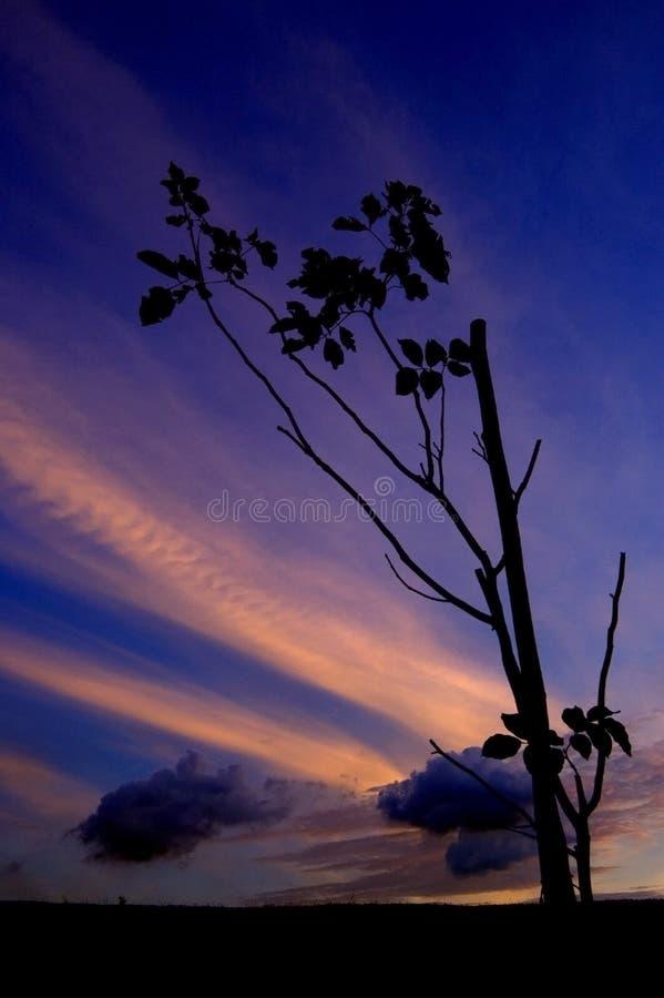 Silhouette d'un arbre images stock