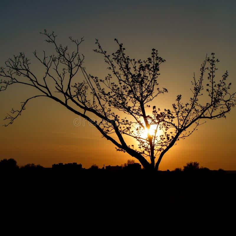 Silhouette d'un arbre dans le coucher du soleil photo stock
