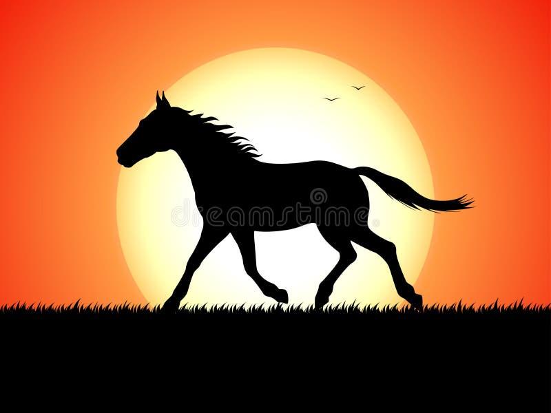 Silhouette d'un cheval courant sur le fond de coucher du soleil illustration stock
