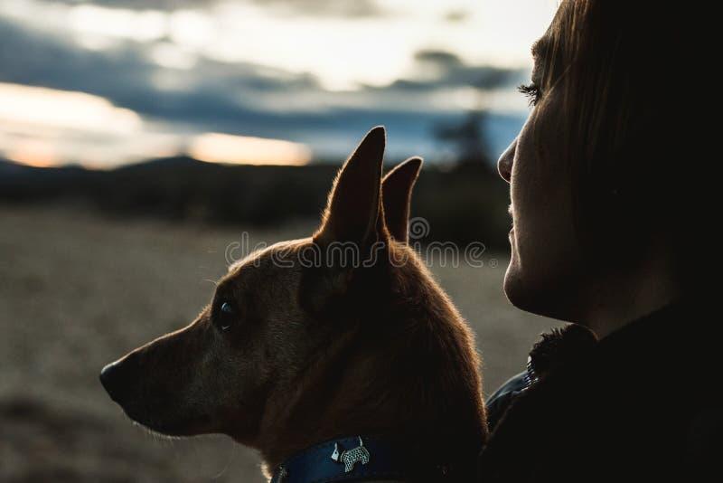 Silhouette d'un chien et d'une fille dans le domaine Fille et chien d'amour photos libres de droits