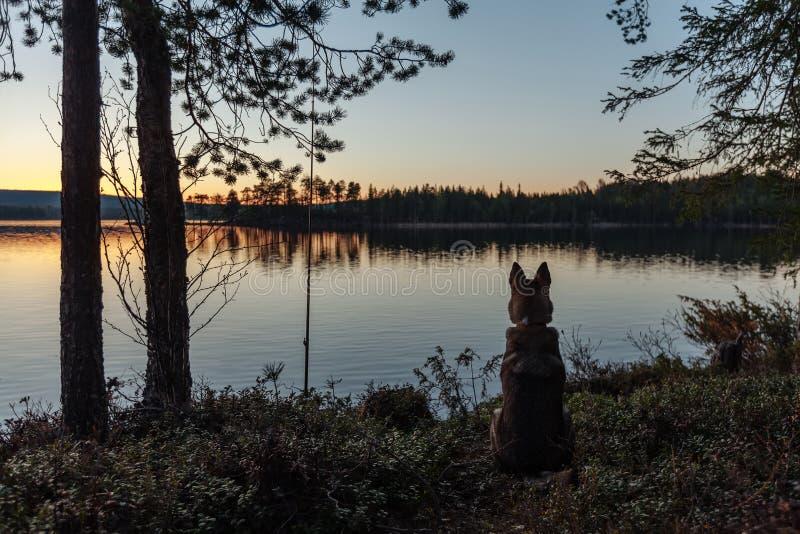 Silhouette d'un chien se reposant sur le rivage d'un lac de forêt photographie stock libre de droits