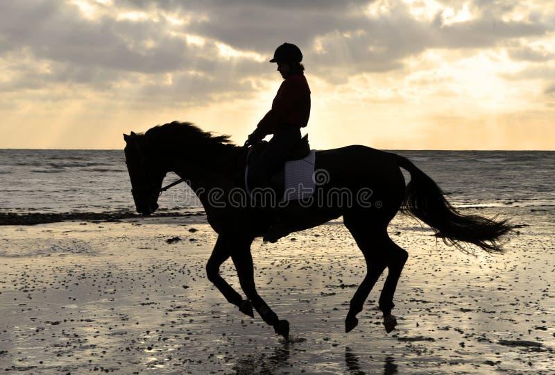 Silhouette d'un curseur de cheval avançant à petit galop sur la plage images libres de droits