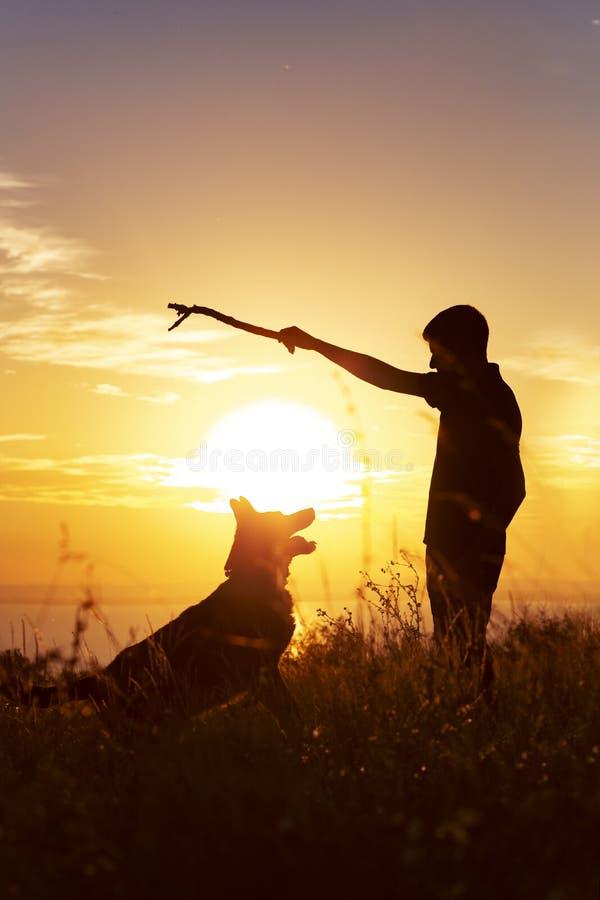 Silhouette d'un jeune homme marchant avec un chien sur le champ au coucher du soleil, garçon jouant le bâton en bois avec son ani images stock