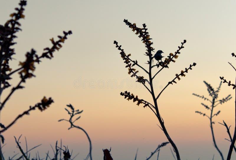 Silhouette d'un oiseau images libres de droits