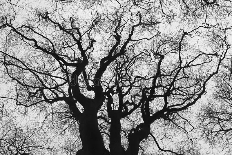 Silhouette d'un vieil arbre images stock