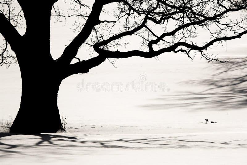 Silhouette d'un vieil arbre photos stock