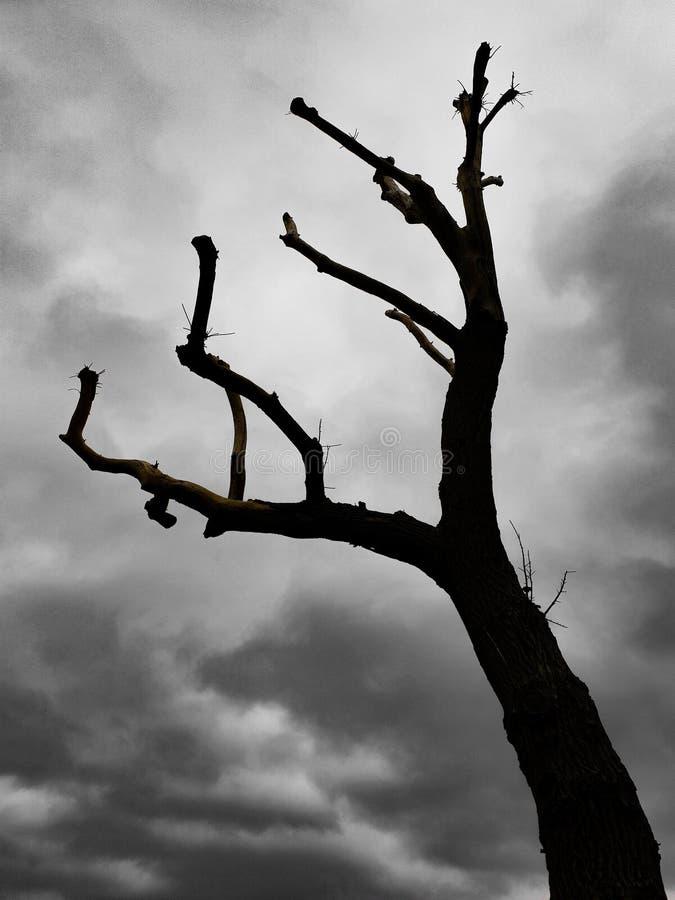 Silhouette d'un vieil arbre contre les nuages dramatiques noirs et blancs photo libre de droits