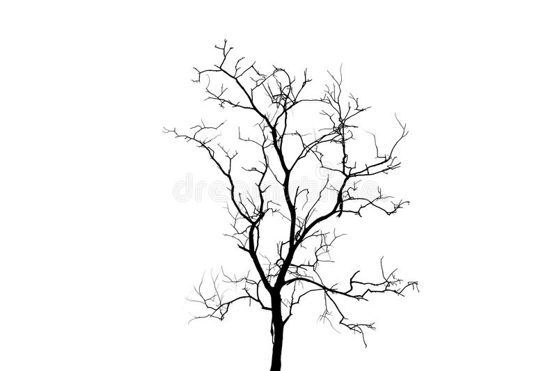Silhouette daed tree on the white background. royalty free stock photography