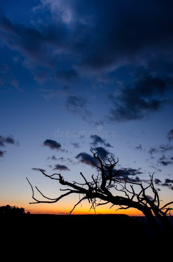 Silhouette de branche au coucher du soleil image stock