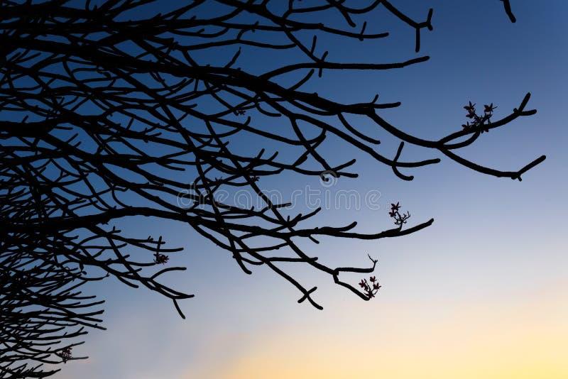 Silhouette de branches images libres de droits