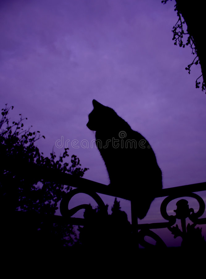 Silhouette de chat photos stock