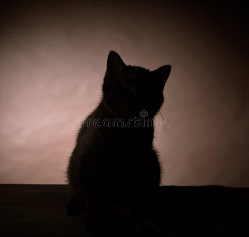 Silhouette de chaton photographie stock libre de droits