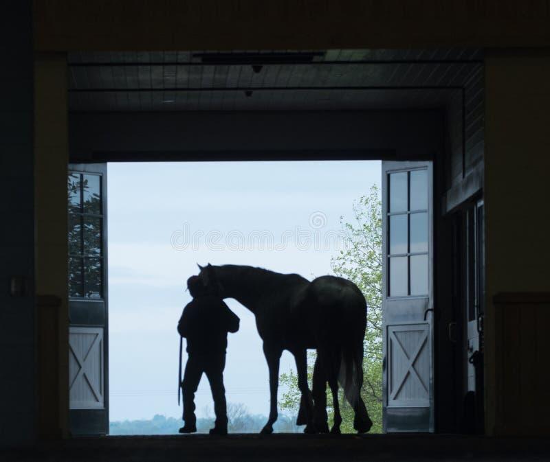 Silhouette de cheval photographie stock libre de droits