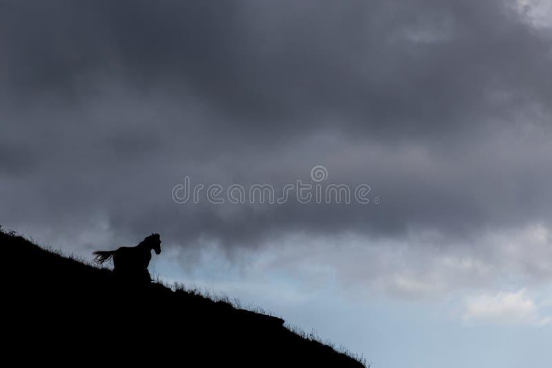 Silhouette de cheval photo libre de droits
