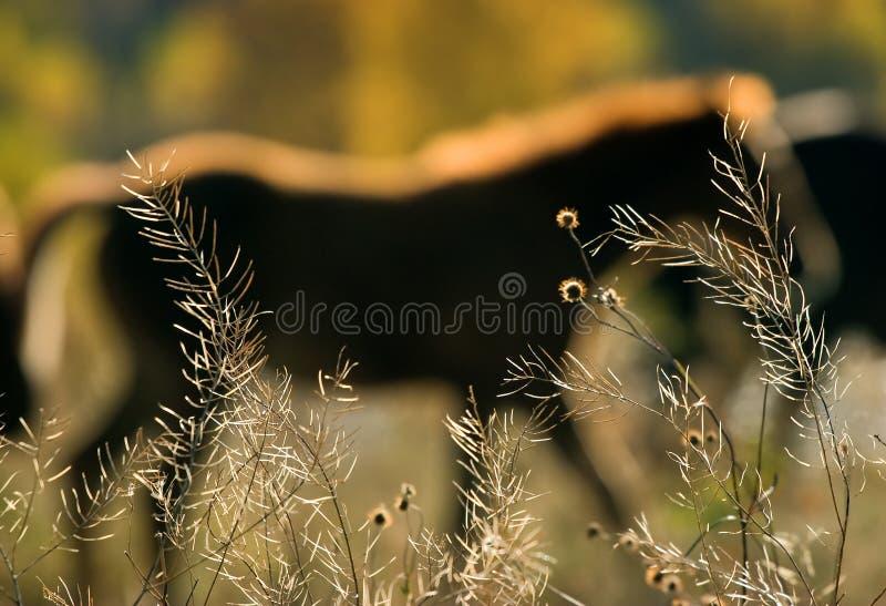 silhouette de chevaux photographie stock