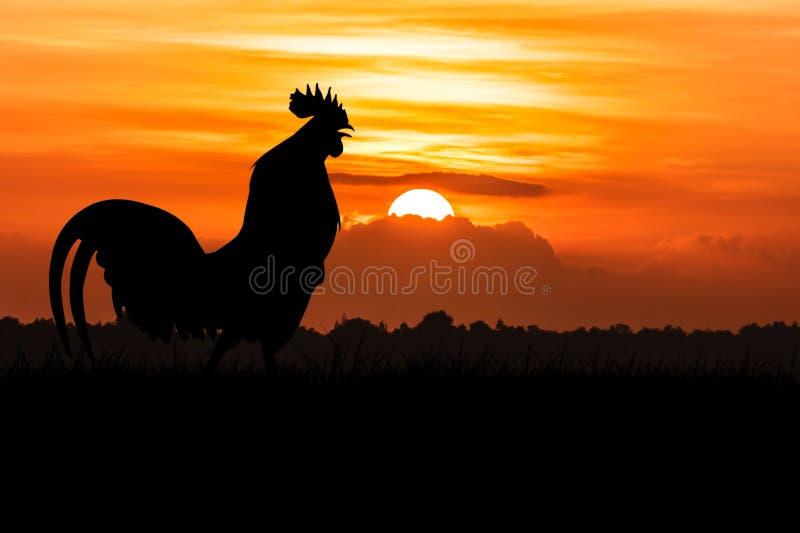 Silhouette de corneille de coqs sur la pelouse photographie stock