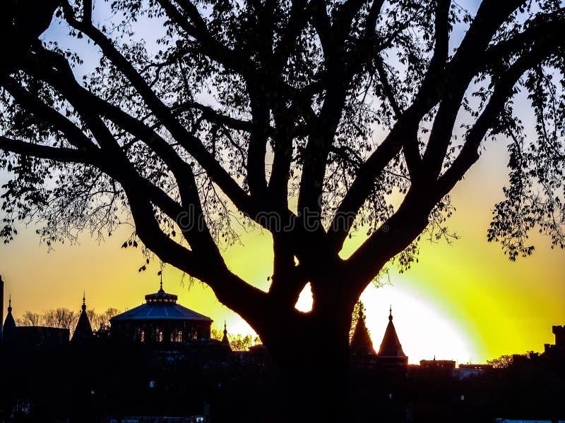 silhouette de coucher du soleil des bâtiments et des arbres images libres de droits